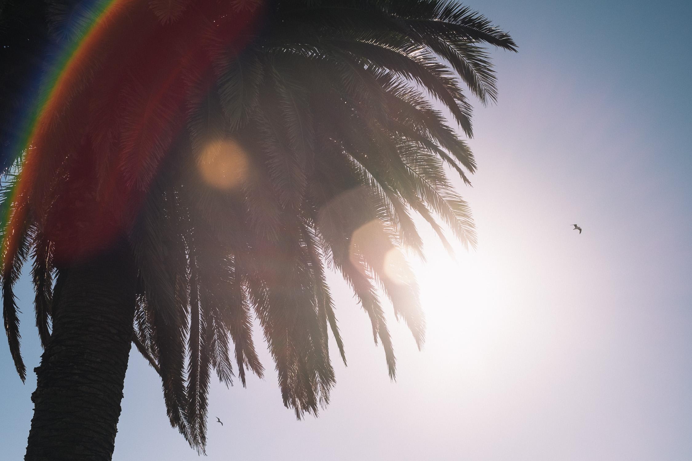 Carina Sze Lau - Life Session - palm trees in St Kilda Melbourne